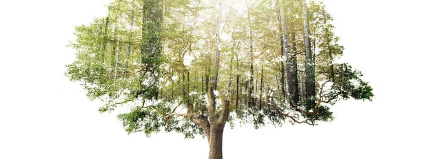 Ein Baum, in dessen Silhouette ein Wald zu sehen ist