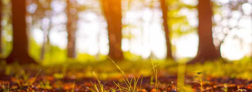 Bäume im Licht - Impressionen aus dem Wolschaft Wald