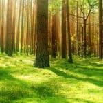 Waldboden im Licht mit vielen Bäumen im Hintergrund