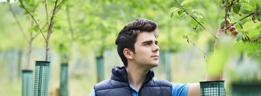 Ein Mann, der einen nachwachsenden Baum kontrolliert