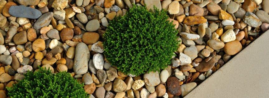Schotter mit einer Grünpflanze als Dekoration am Wegrand
