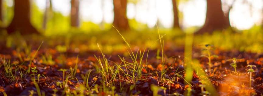 Waldboden im Herbstlicht mit verschwommenen Bäumen im Hintergrund