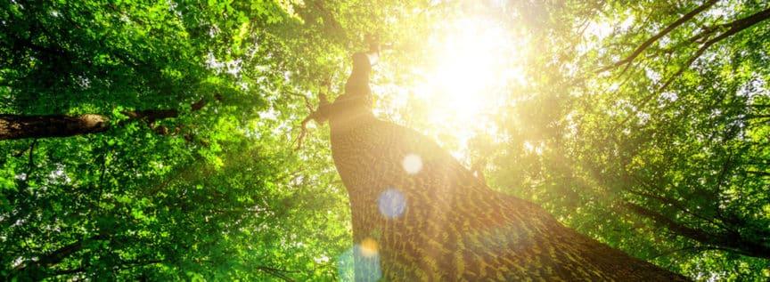 Ein Baumstamm gegen den Himmel fotografiert auf den die Sonne scheint