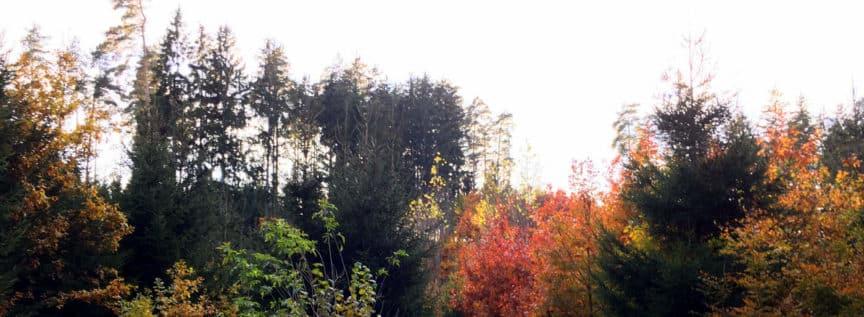 Wolschart Wald Bäume