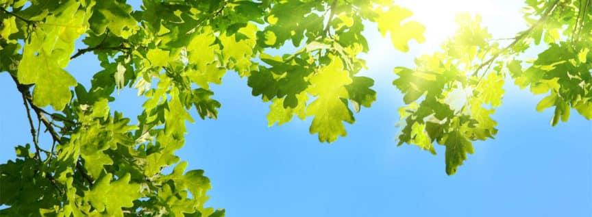 Ein Blick in den Himmel durch eine Baumkrone