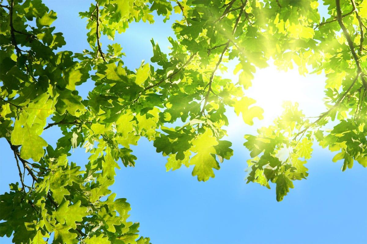 Blick durch Blätter auf den Himmel und die Sonne