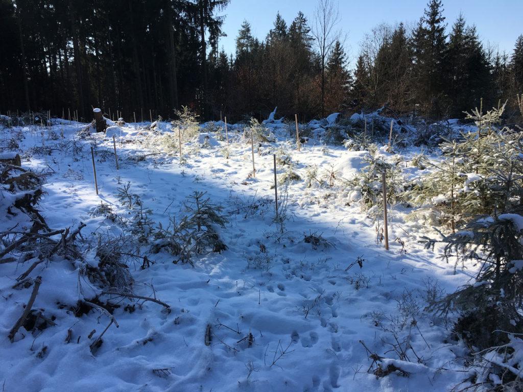 Einzelne Bäume im Wald mit Markierungen schützen